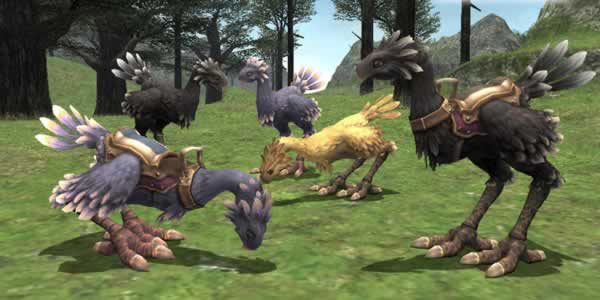 Final Fantasy XI: Le Chocobo